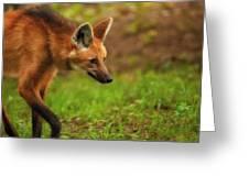 Wolf Strut Greeting Card by Karol  Livote