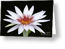 Wonderful White Water Lily Greeting Card by Sabrina L Ryan