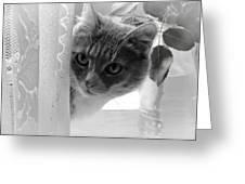 Wondering. Kitty Time Greeting Card by Jenny Rainbow