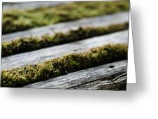 Wood And Vegetal Greeting Card by Marcio Faustino