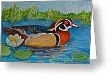 Wood Duck Greeting Card by Joan Landry