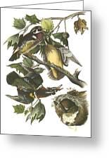 Wood Duck Greeting Card by John James Audubon
