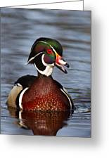 Wood Duck Laugh Greeting Card by Jim Cumming