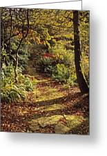 Woodland Path, Mount Stewart, Ards Greeting Card by The Irish Image Collection
