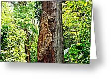 Woodpecker Tree Greeting Card by Piety Dsilva
