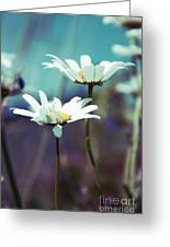 Xposed - S02 Greeting Card by Variance Collections