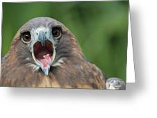 Yawning Hawk Greeting Card by Alexander Spahn
