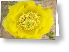 Yellow Cactus Flower Greeting Card by Mario Bonaparte