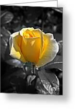 Yellow English Rose Vertical Greeting Card by Stephen Clarridge