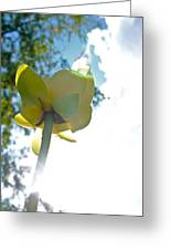 Yellow Flower Greeting Card by Snow White