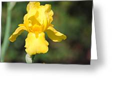 Yellow Iris Greeting Card by Jai Johnson