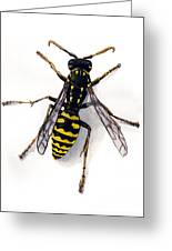 Yellow Jacket Greeting Card by Steve Benton