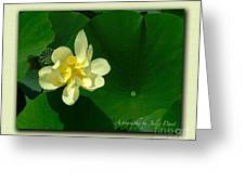 Yellow Lotus Blossom in Mississippi  Greeting Card by Julie Dant