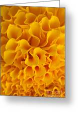Yellow Marigold Macro View Greeting Card by Atiketta Sangasaeng