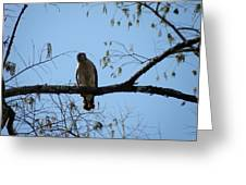 Yellow Tailed Hawk Greeting Card by Mary Hurst