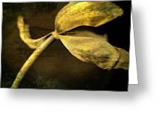 Yellow Tulip Greeting Card by Bernard Jaubert