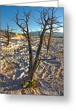 Yellowstone National Park - Minerva Terrace - Dead Tree Greeting Card by Gregory Dyer