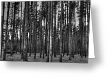 Yellowstone Trees Bw Greeting Card by Bruce Friedman