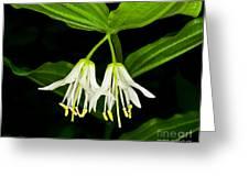 Yoho - Roughfruit Fairybells Greeting Card by Terry Elniski