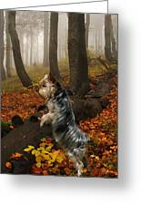 Yorkie On The Hunt Greeting Card by Rick Friedle