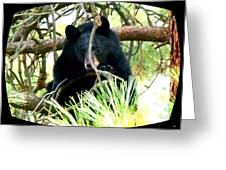 Young Black Bear Greeting Card by Will Borden
