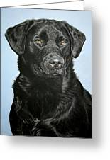 Young Black Labrador Greeting Card by Lucy Swinburne