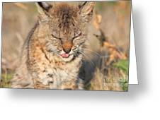 Young Bobcat 02 Greeting Card by Wingsdomain Art and Photography
