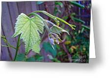 Young Grape Leaves Greeting Card by Padre Art