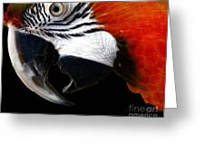 Zazzo The Macaw Greeting Card by Kevin Moore