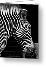 Zebra Greeting Card by Brendan Reals