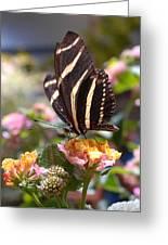 Zebra Longwing Butterfly Greeting Card by Diane Giurco