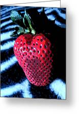 Zebra Strawberry Greeting Card by Kym Backland