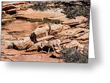 Zion Sheep Greeting Card by Josh Whalen