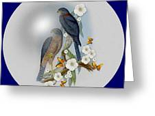 Collared Sparrow Hawk Greeting Card by Madeline  Allen - SmudgeArt