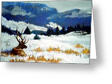 High Country Elk Greeting Card by Curt Peifley