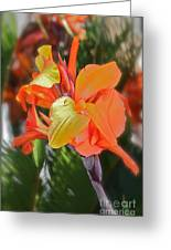 Orange Bright Greeting Card by Maureen J Haldeman