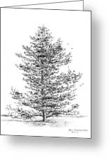 Pine Greeting Card by Jim Hubbard