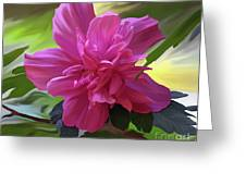 Althea Hibiscus I Greeting Card by Patricia Griffin Brett