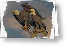 American Bald Eagle Pair Greeting Card by Larry Linton