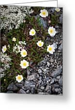 Arctic Flowers Greeting Card by Konstantin Dikovsky