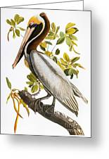 Audubon: Pelican Greeting Card by Granger