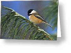 Black-capped Chickadee Greeting Card by Tony Beck