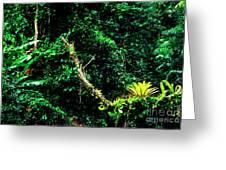 Bromeliads El Yunque National Forest Greeting Card by Thomas R Fletcher
