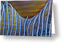 Butterfly Wing Scale Sem Greeting Card by Eye of Science