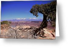 Canyonlands 4 Greeting Card by Marty Koch