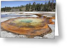 Chromatic Pool Hot Spring, Upper Geyser Greeting Card by Richard Roscoe