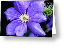 Climbing Clematis Greeting Card by Julie Palencia
