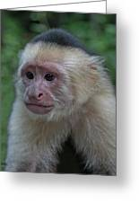 Curious Capuchin Greeting Card by Larry Linton