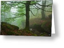 Dark Forest Greeting Card by Evgeni Dinev