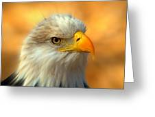 Eagle 10 Greeting Card by Marty Koch